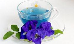 Teh Bunga Telang, Minuman Sehat nan Kaya Antioksidan